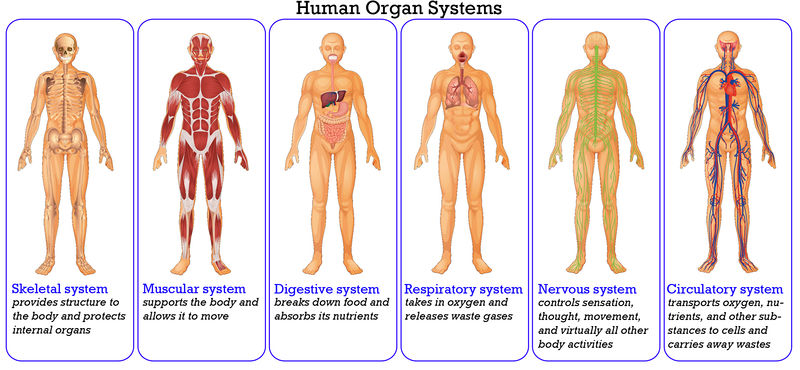 6. organ system of interest - organ donation example site, Human Body
